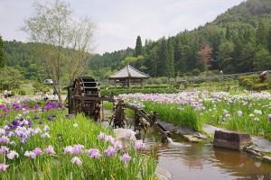 永沢寺「花しょうぶ園」の全景