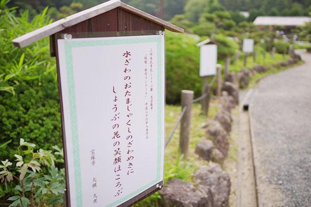 永沢寺「花しょうぶ園」の俳句看板