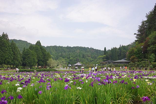 永沢寺「花しょうぶ園」園内の様子1