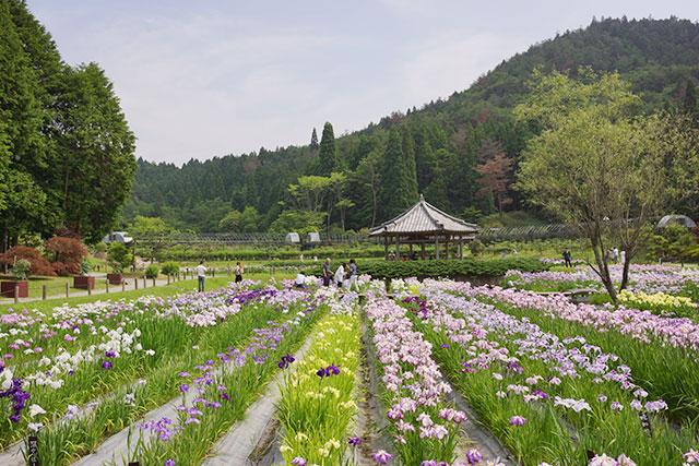 永沢寺「花しょうぶ園」園内の様子9