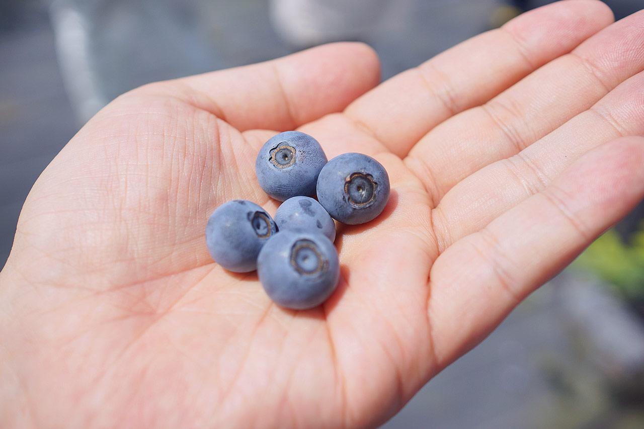 blueberry-07