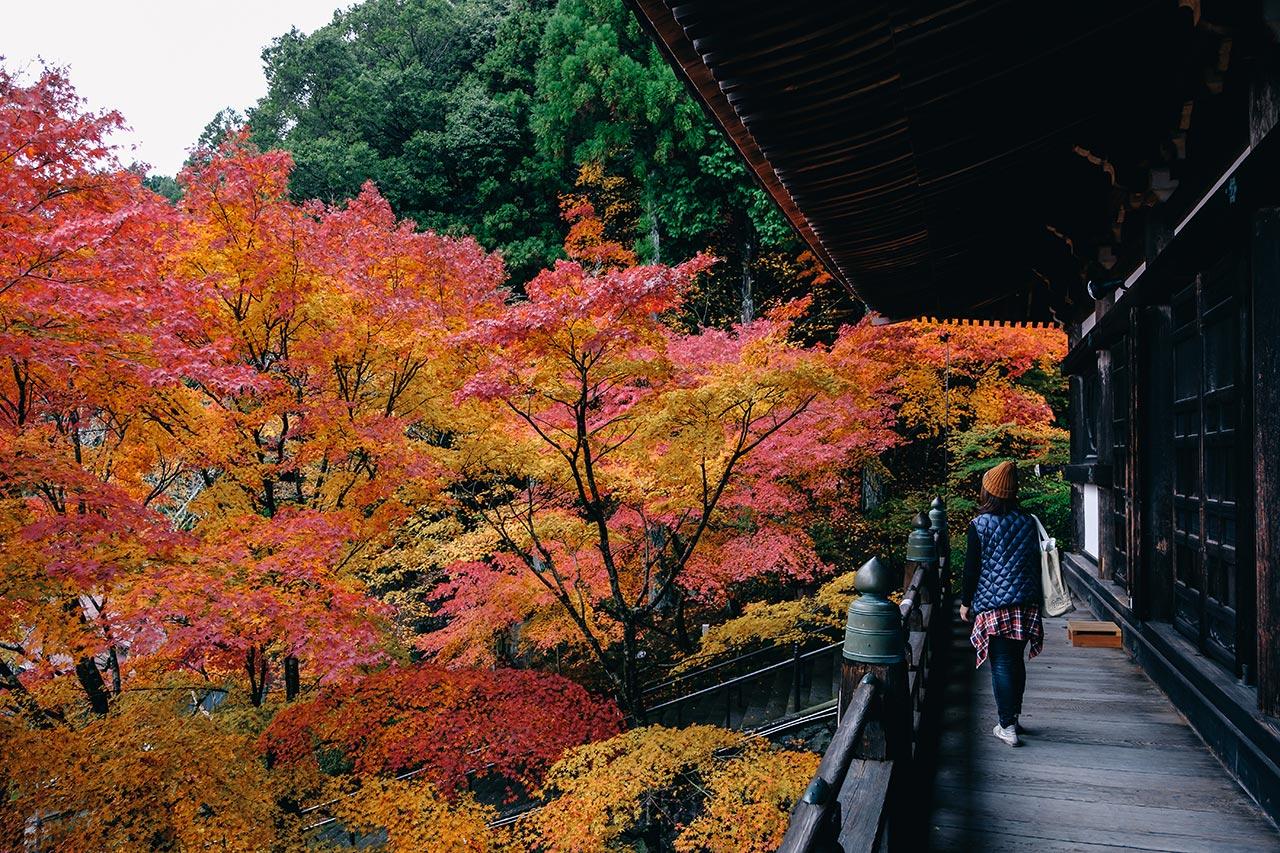 加東市にある紅葉スポット「播州清水寺」の紅葉を見てきたよ