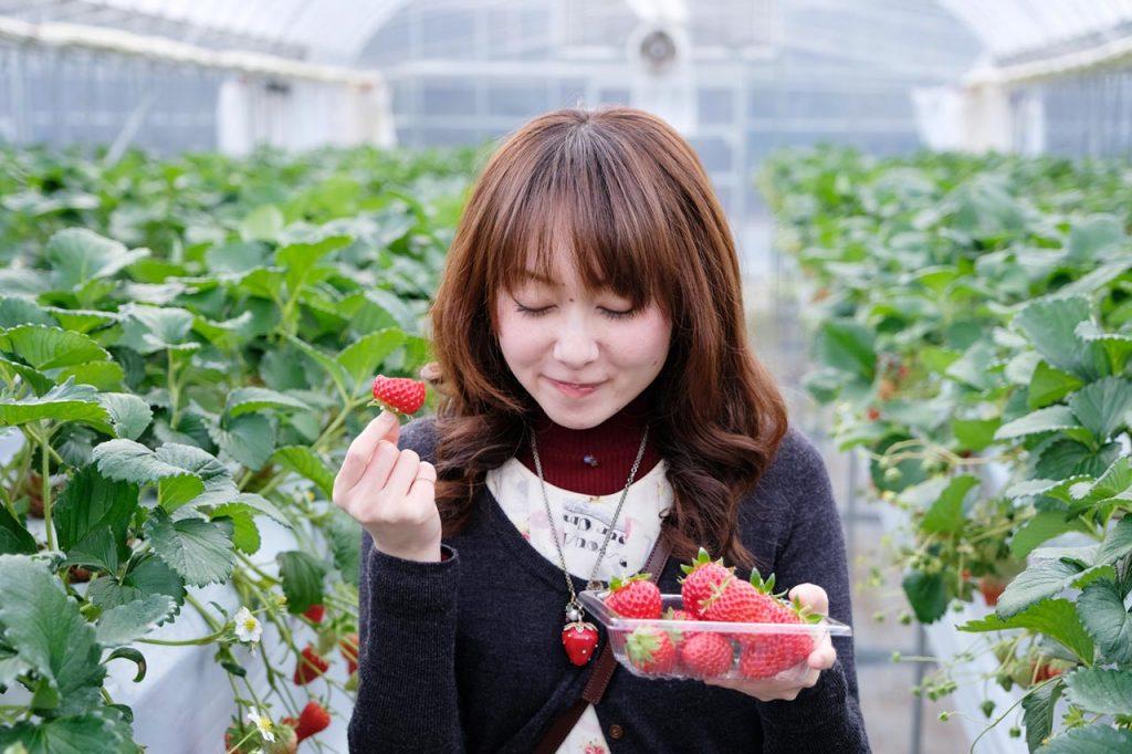 原田いちごファームのいちご狩りは1月が旬!こんなに美味しくていいの?【PR】