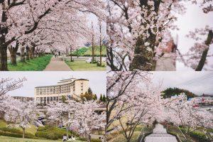 【2018年】三田市のおすすめ桜スポットまとめ。今年はココでお花見をしよう!