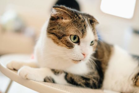 三田市駅前町にある里親探しの猫カフェ「猫結び」で猫たちと過ごす癒しのひとときを